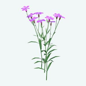 Vŕbovka malokvetá